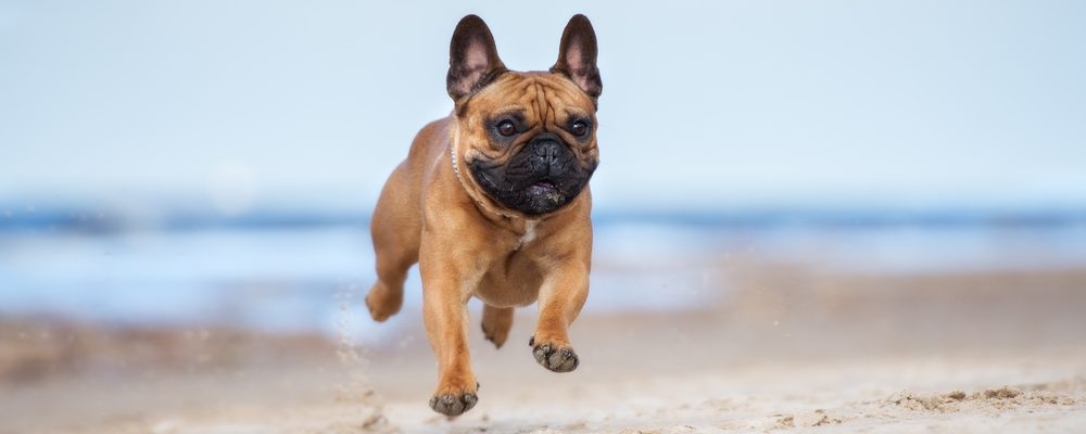 cani in spiaggia a minorca