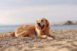 Los mejores hoteles en Menorca que aceptan perros