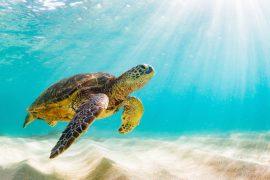 La tartaruga marina protagonista di ONA, la rivista della Riserva delle Biosfera di Minorca