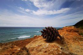 39 nuovi progetti orientati all'educazione ambientale a Minorca